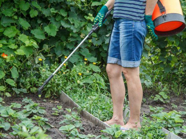 Болезни могут погубить растения