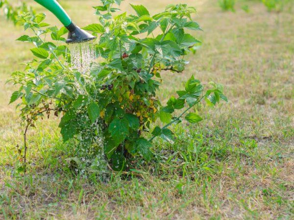 Органические удобрения улучшают качество почвы
