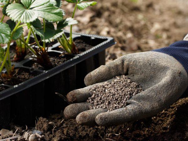 Подкормки насыщают растения микроэлементами