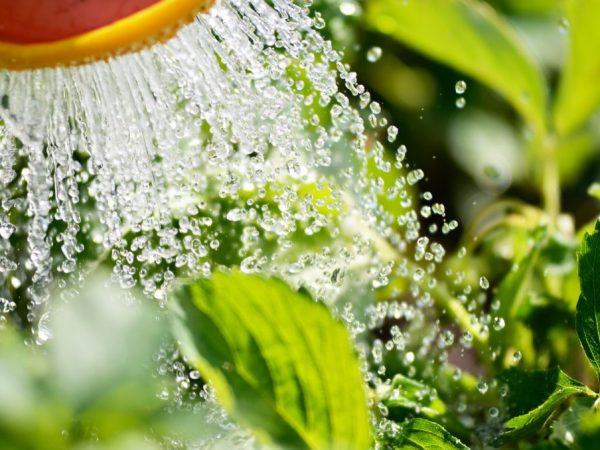 Подкормки помогают растениям перезимовать
