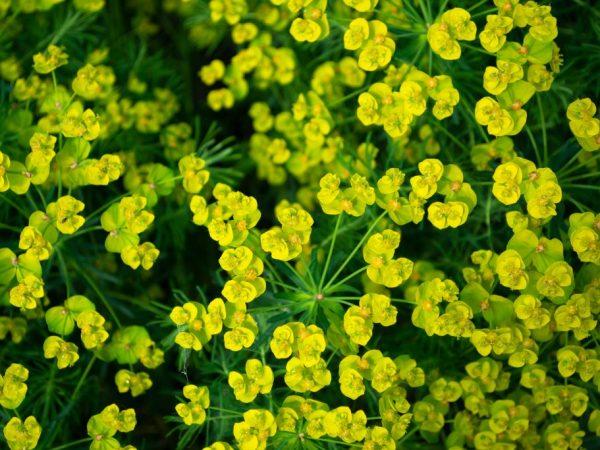 Садим красивые цветочки