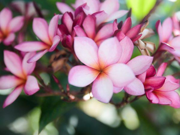 Выращиваем цветок самостоятельно