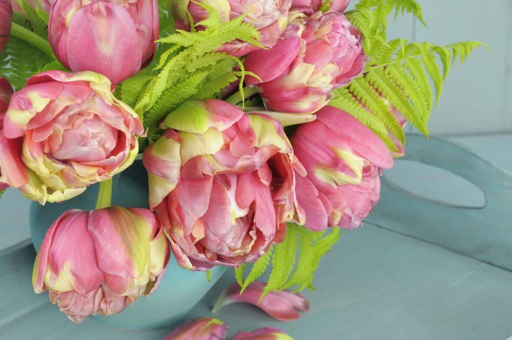 Пионовидные тюльпаны фото их сорта и названия