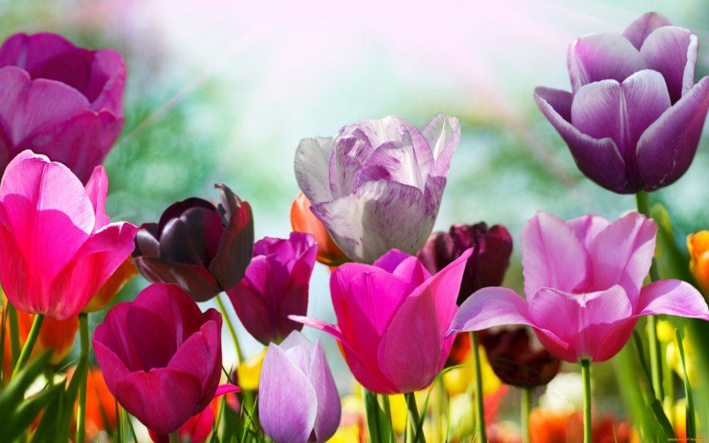 Срезанные тюльпаны хранение это