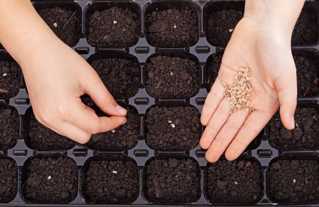 Подготовка и посадка семян на рассаду